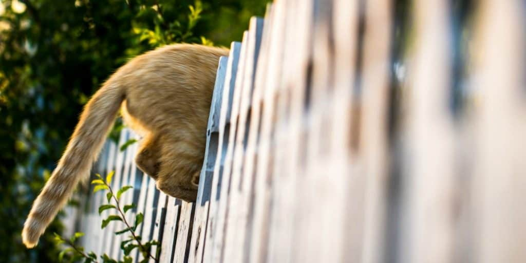 a cat's butt and tail sticking out from a picket fence