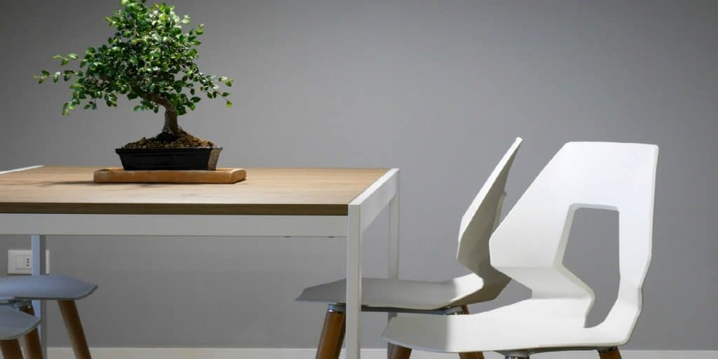 plant, dining table, white chairs