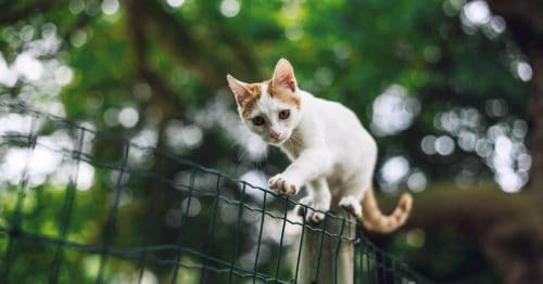 kitten finding its balance on a wire fence