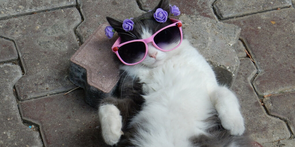 a cat wearing sunglasses lazing on its back