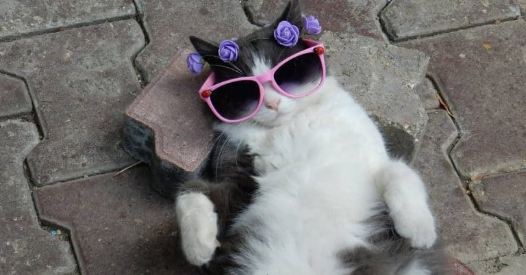 cat being idle on his back wearing pink sunglasses